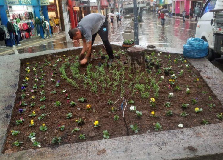 Floreiras do calçadão recebem novas mudas em ação que revigora o tradicional local de comércio da cidade — Foto: Divulgação SMMA