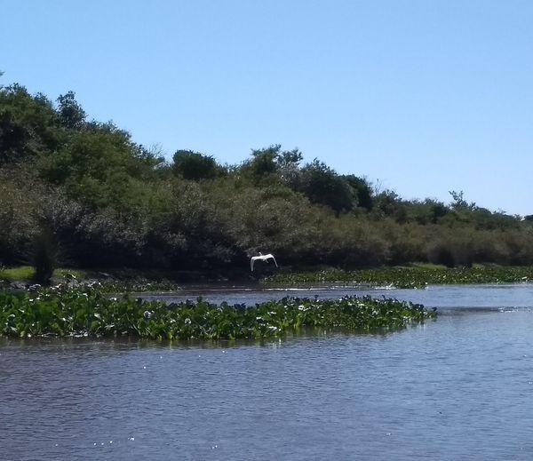 APA do Banhado Grande é a maior do Rio Grande do Sul — Crédito: Grupo de Estudos de Áreas Úmidas